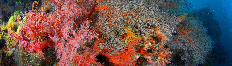 reef colorati della Maldive