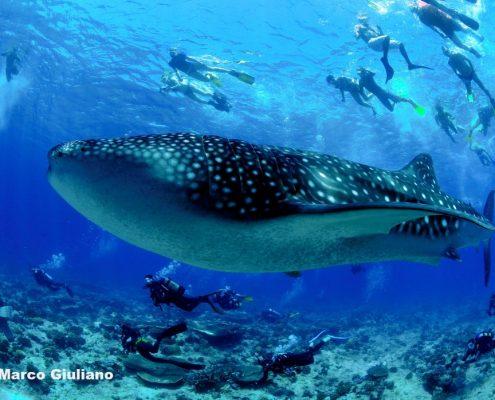avvisatmento squali durante immersioni in crociera