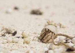 Fauna marina viaggio nell'Oceano Indiano