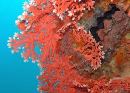crociere sub Maldive