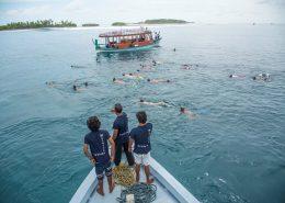 avvistamento squali balena Maldive con Macana