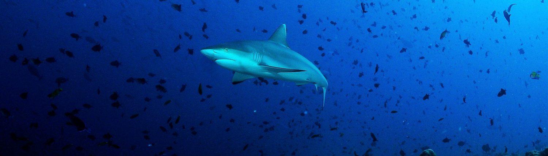 immersioni alle Maldive
