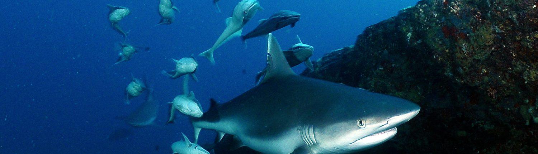 immersioni e avvistamento squali in vacanza