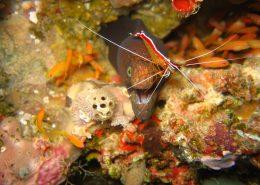 crociera sub Maldive