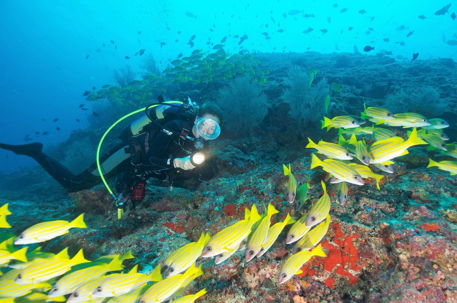 Diving immersione mare delle Maldive