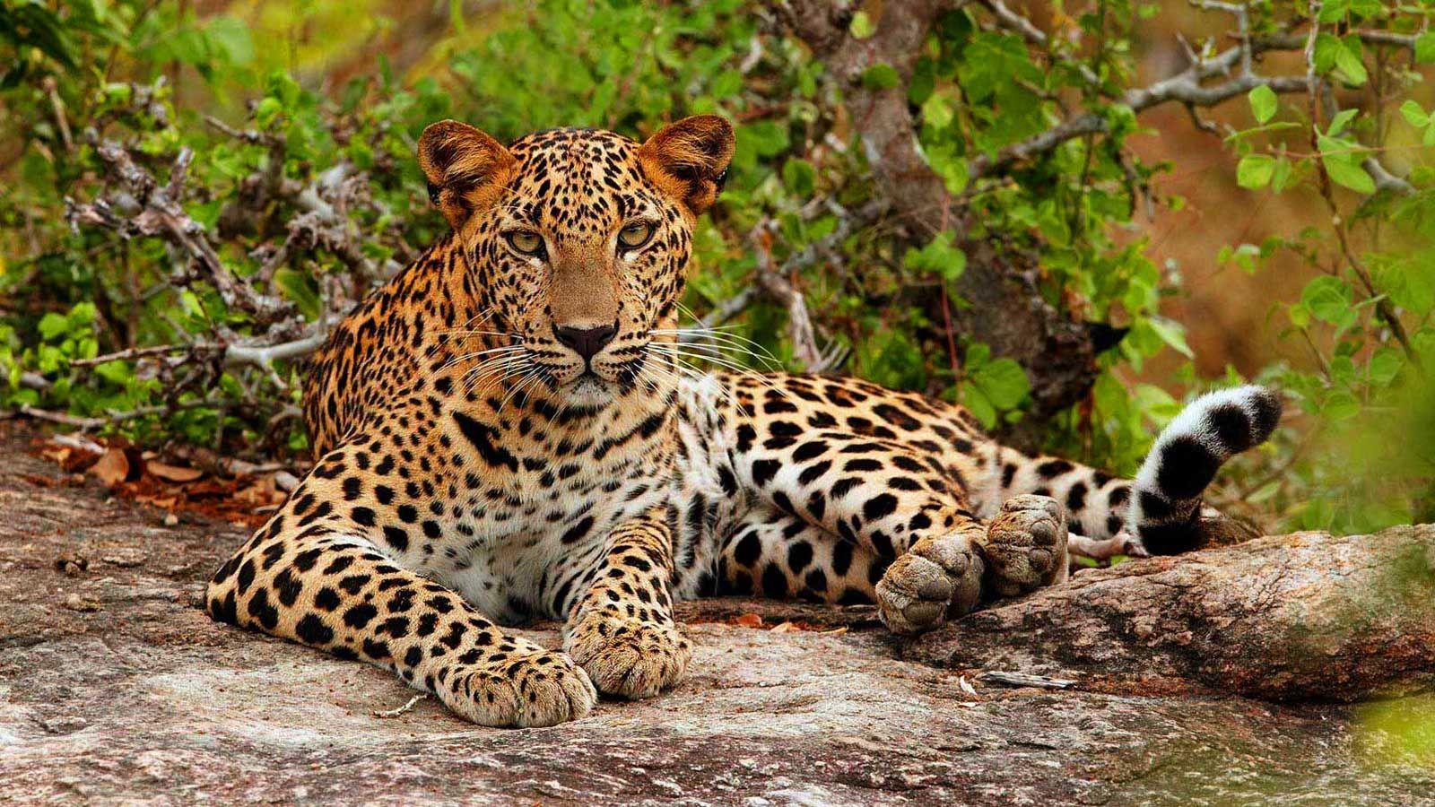 tour a Sri Lanka