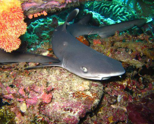 squalo immersioni komodo