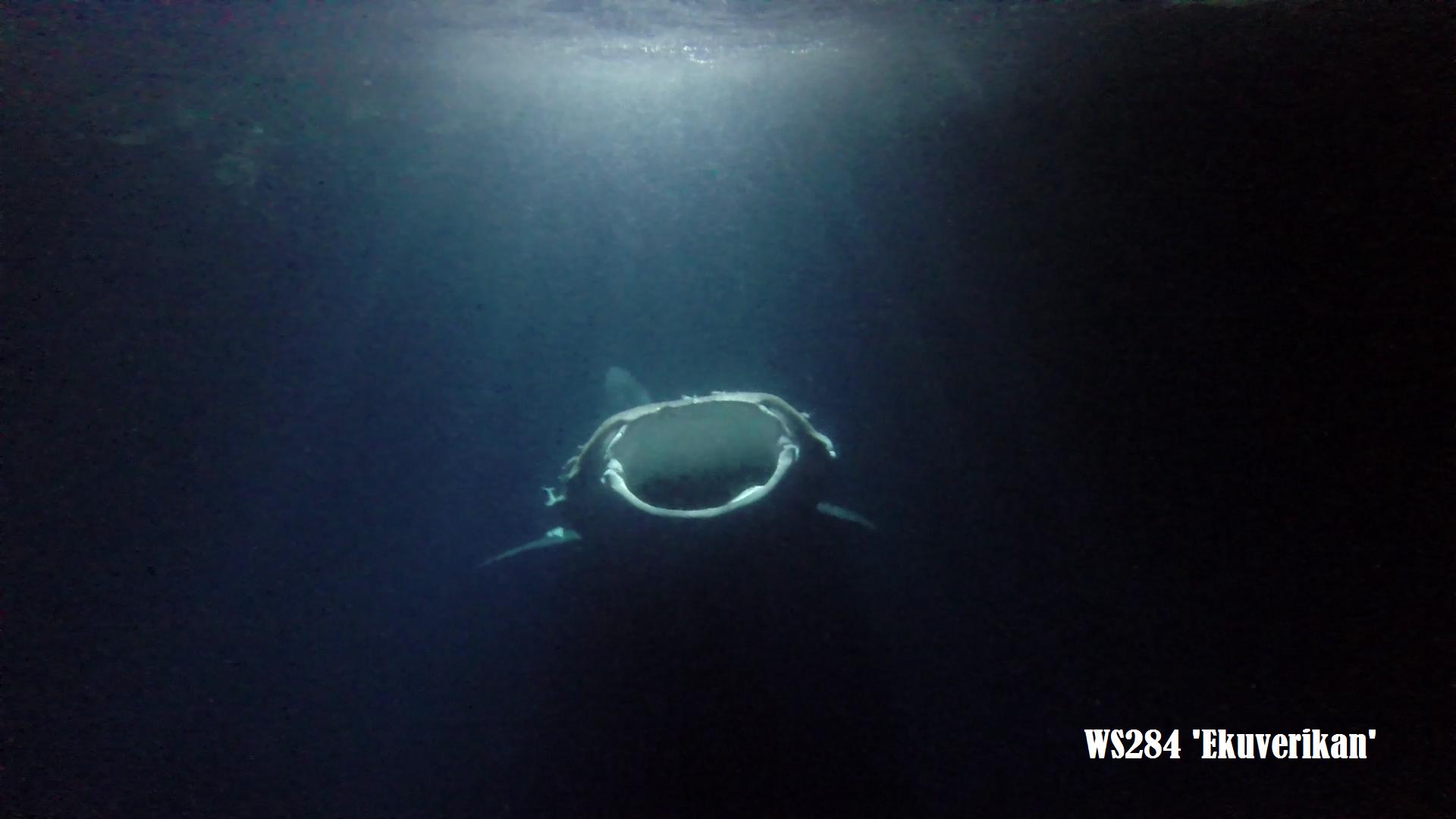avvistamento squalo maldive durante immersione